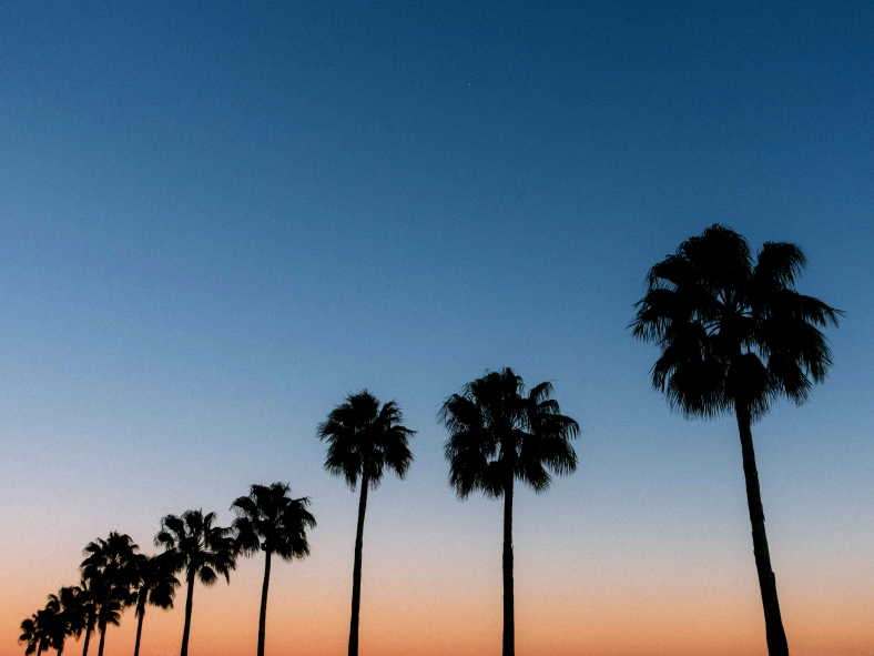 ShoreBlvdPalms